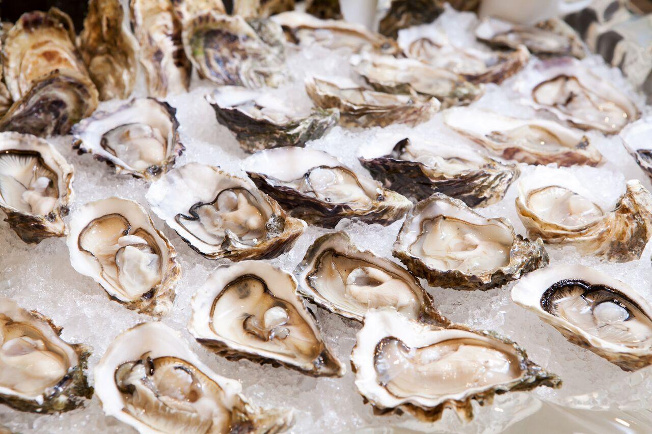 san diego oysters